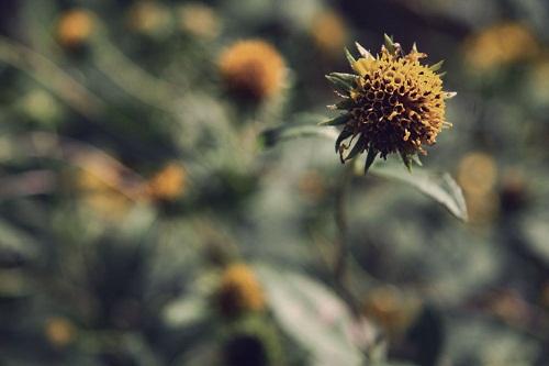 Nature Photography momspark.net