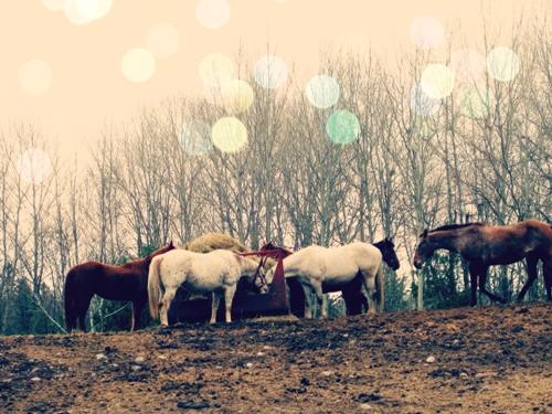 Horse Photo Photography momspark.net