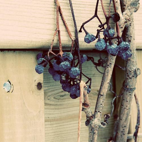 february berries momspark.net