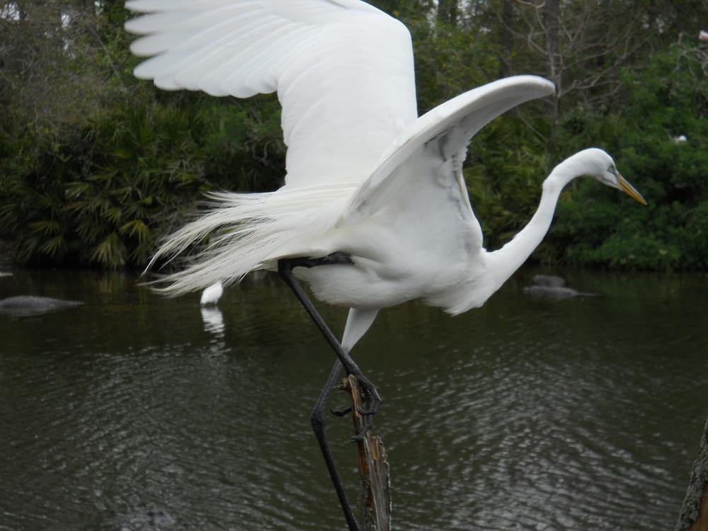Gatorland Orlando Florida momspark.net crane