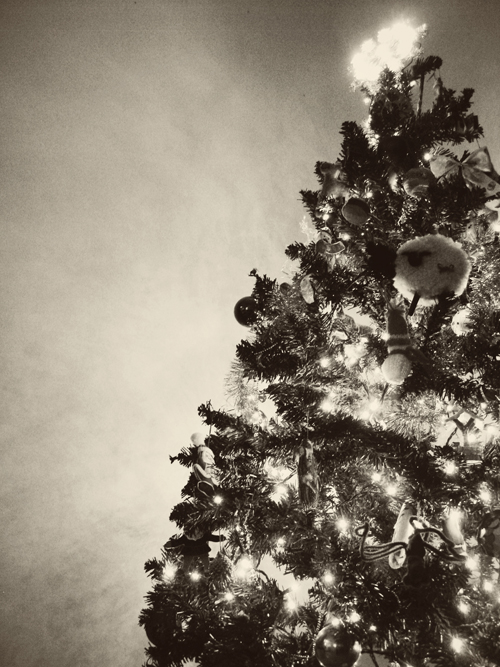wordless wednesday christmas tree