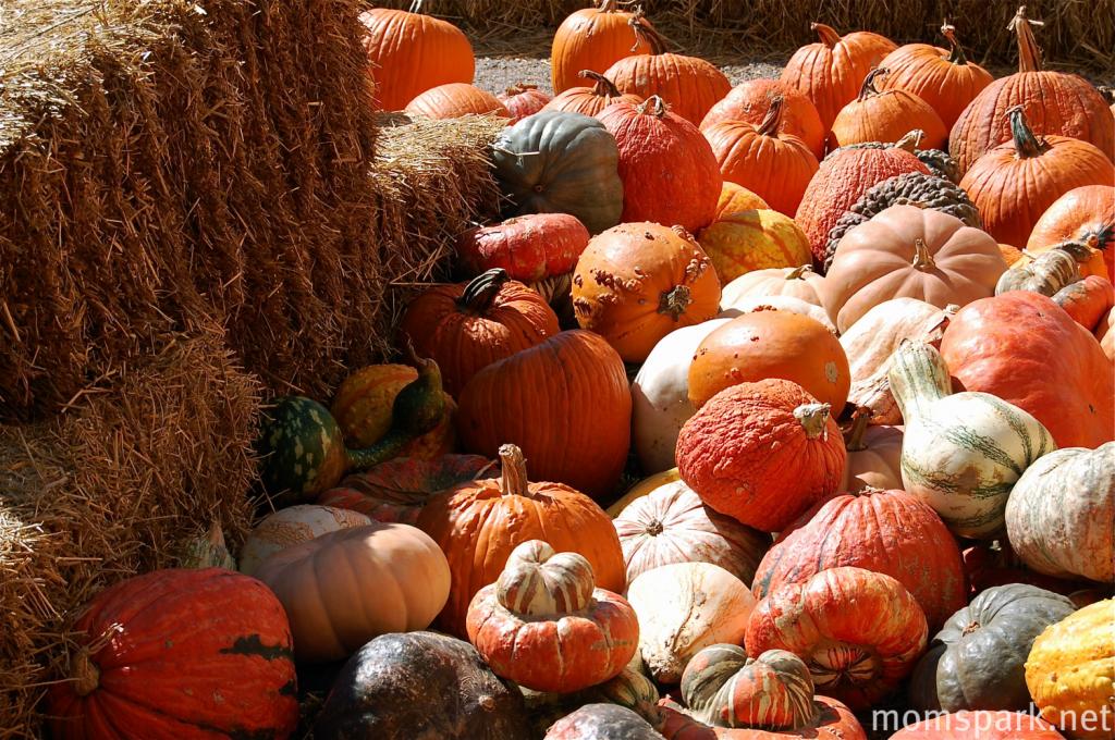 Hay Maze pumpkin patch oklahoma momspark.net