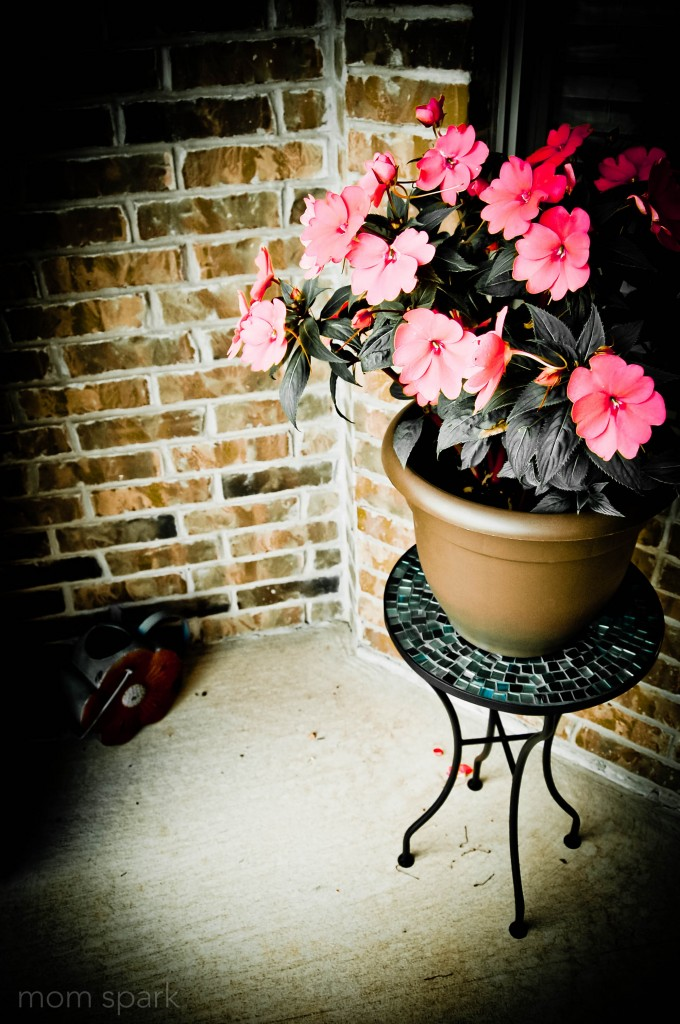 Potted Flowers on porch