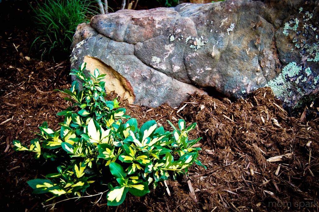 plant and boulder garden