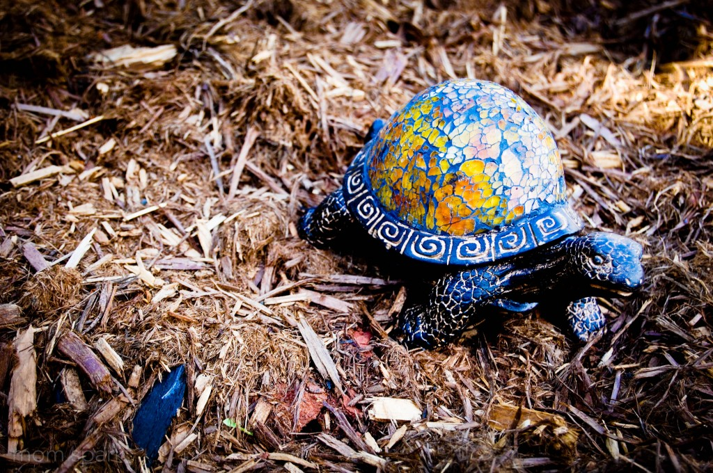 turtle in flower garden