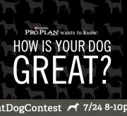 #greatdogcontestgraphic