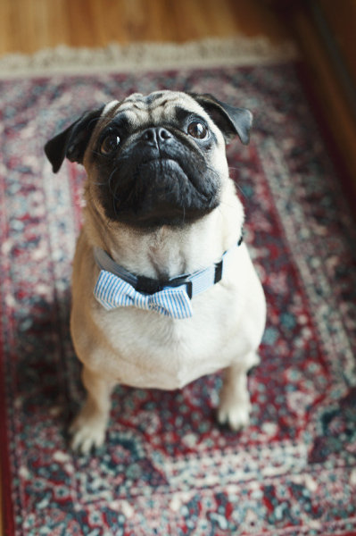 New Year's Eve Fashion Pets Dog Bowtie