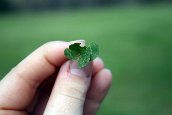 Have You Ever Found A Four Leaf Clover?