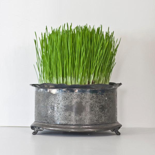Victoria teapot warmer planter