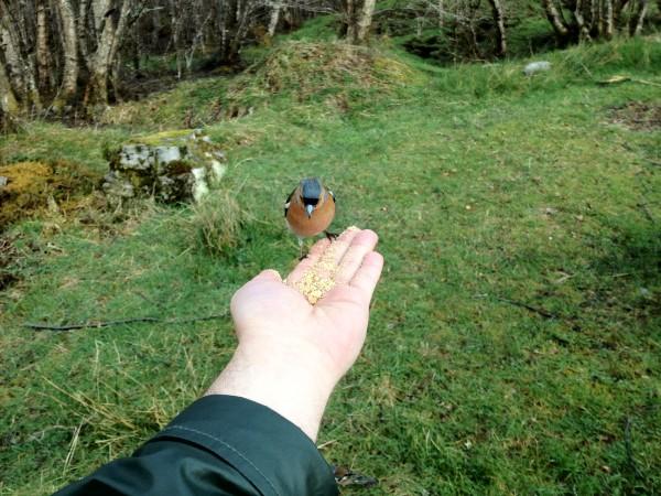 Scotland Bird Photography