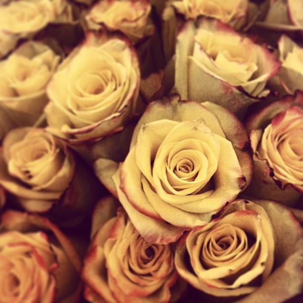 Yellow Roses 2