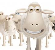 Serta Sheep Herd