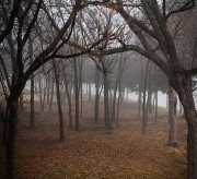 Fog in Forest Photograph