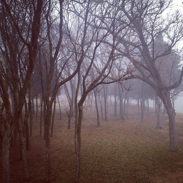Instagram photography - fog
