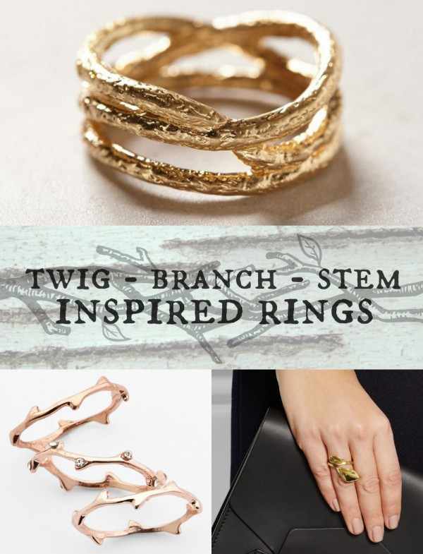 twig-branch-rings