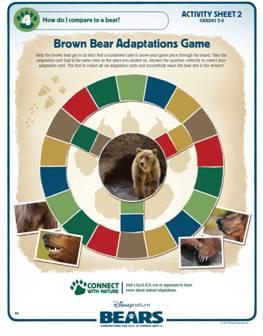 Bears-Activities