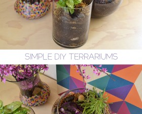 header-terrariums-dreamalittlebigger