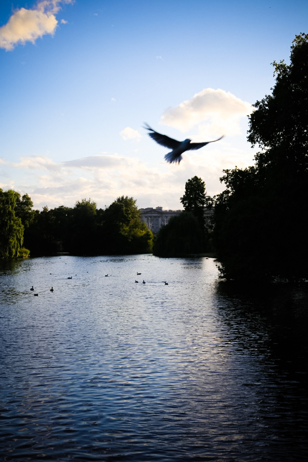 St. James's Park in London, England