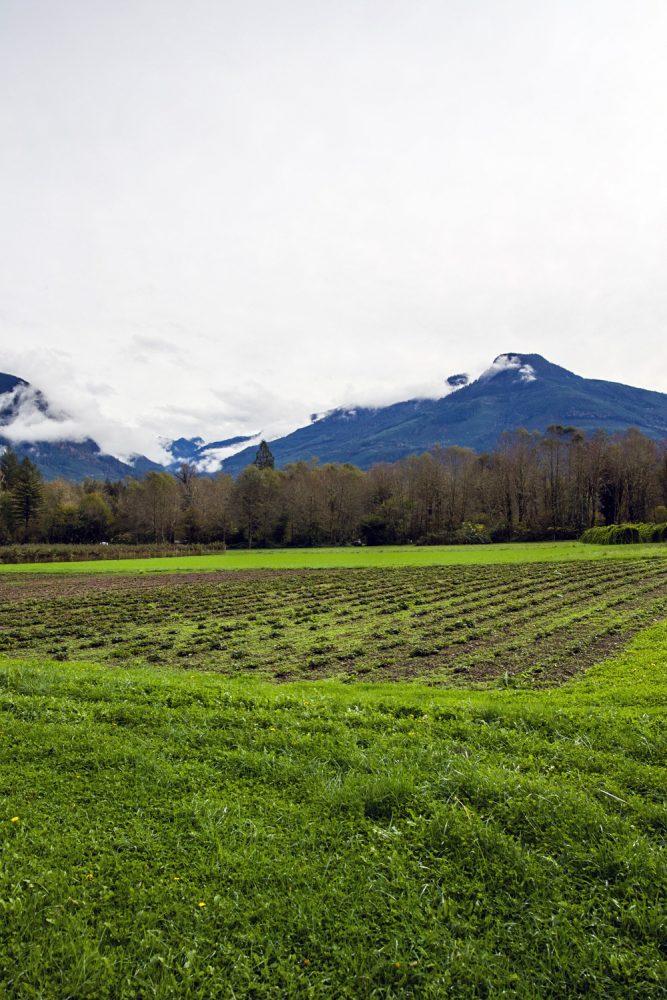 Cascadian-Farm-20