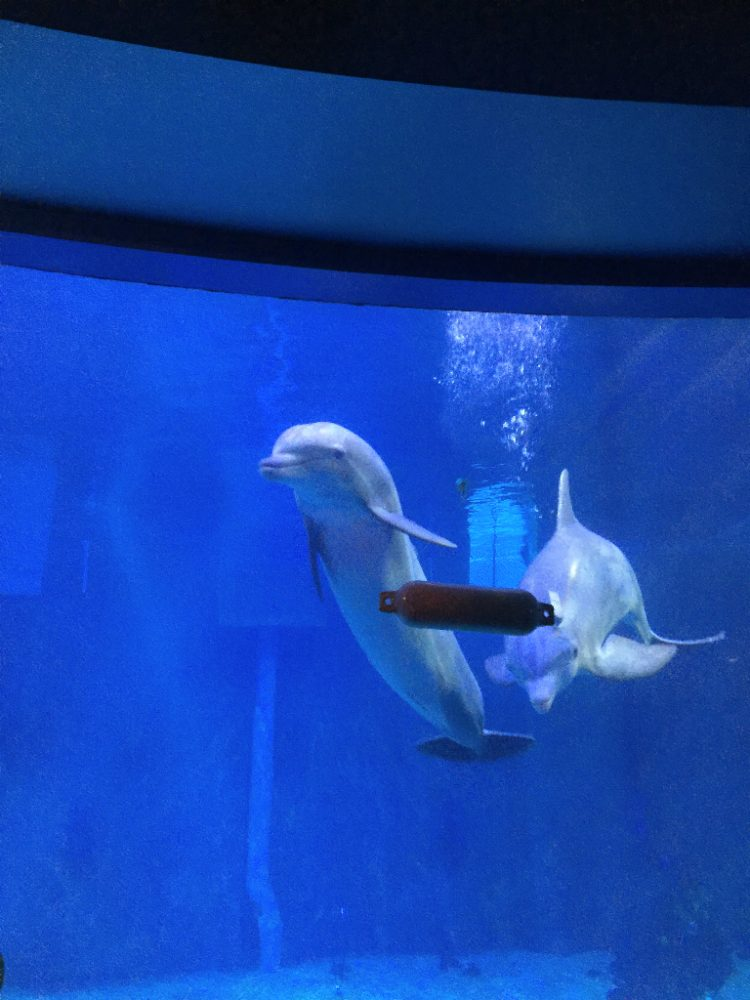 "EPCOT's ""Living Seas"" and Dolphin Research"