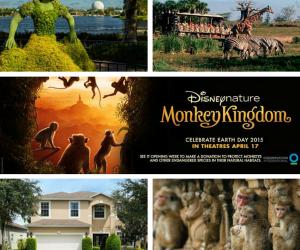 #MonkeyKingdomEvent