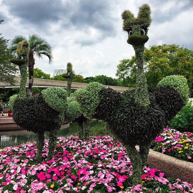 Epcot 39 s international flower garden festival mom spark - Leesburg flower and garden festival 2017 ...