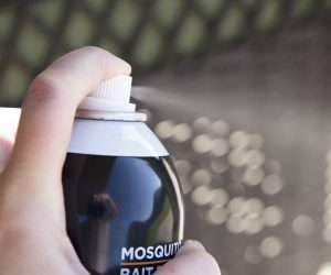 Is Summer the End of Mosquito Season?