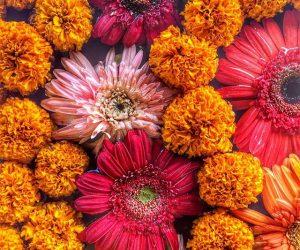flowers-of-nepal
