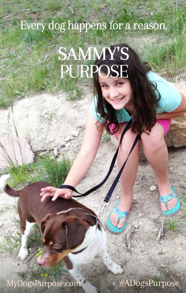 What is YOUR Dog's Purpose?