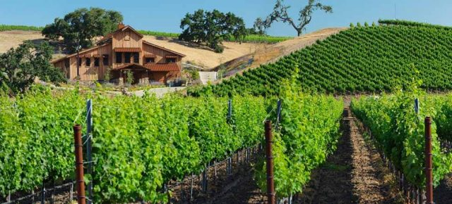 Grassini Vineyards and Sunstone Vineyards & Winery - What to Do on Your First Trip to Santa Barbara