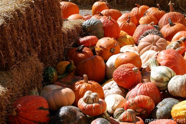 Chester Pumpkin Patch Piedmont Oklahoma