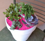 Succulents get an amazing punch of pop when placed in a tiered white and hot pink planter!