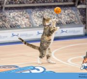Hallmark Channel's #MeowMadness Twitter Party and Christmas Bracket Alert!